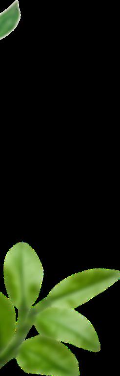 Olio 4